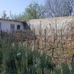 Grundstücksansicht m. Weinber